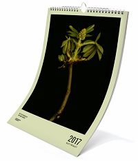 gpm_greenpeace_kalender_2017_cover_200