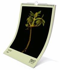 Greenpeace Magazin Kalender 2017